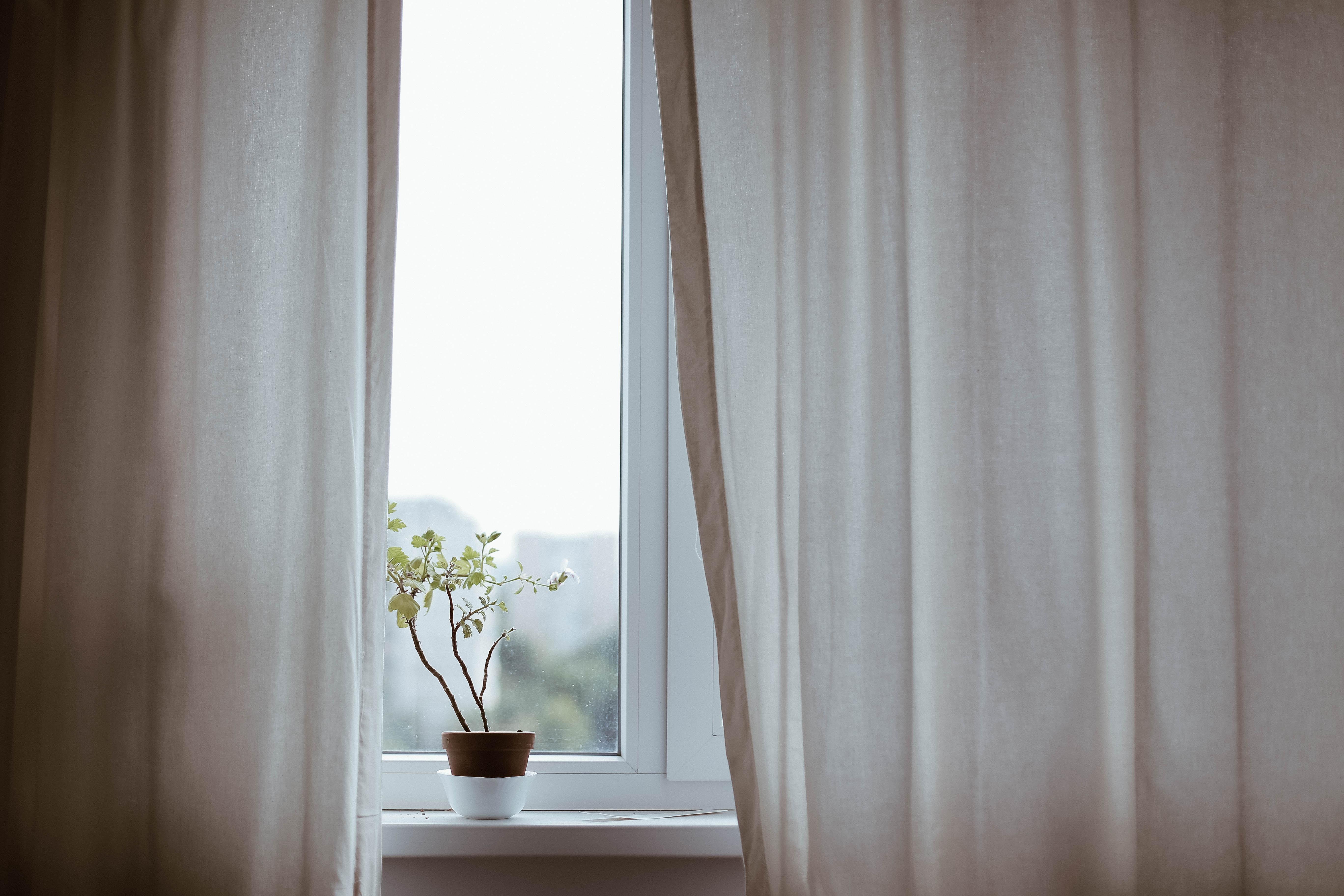 viherkasvi ikkunalaudalla