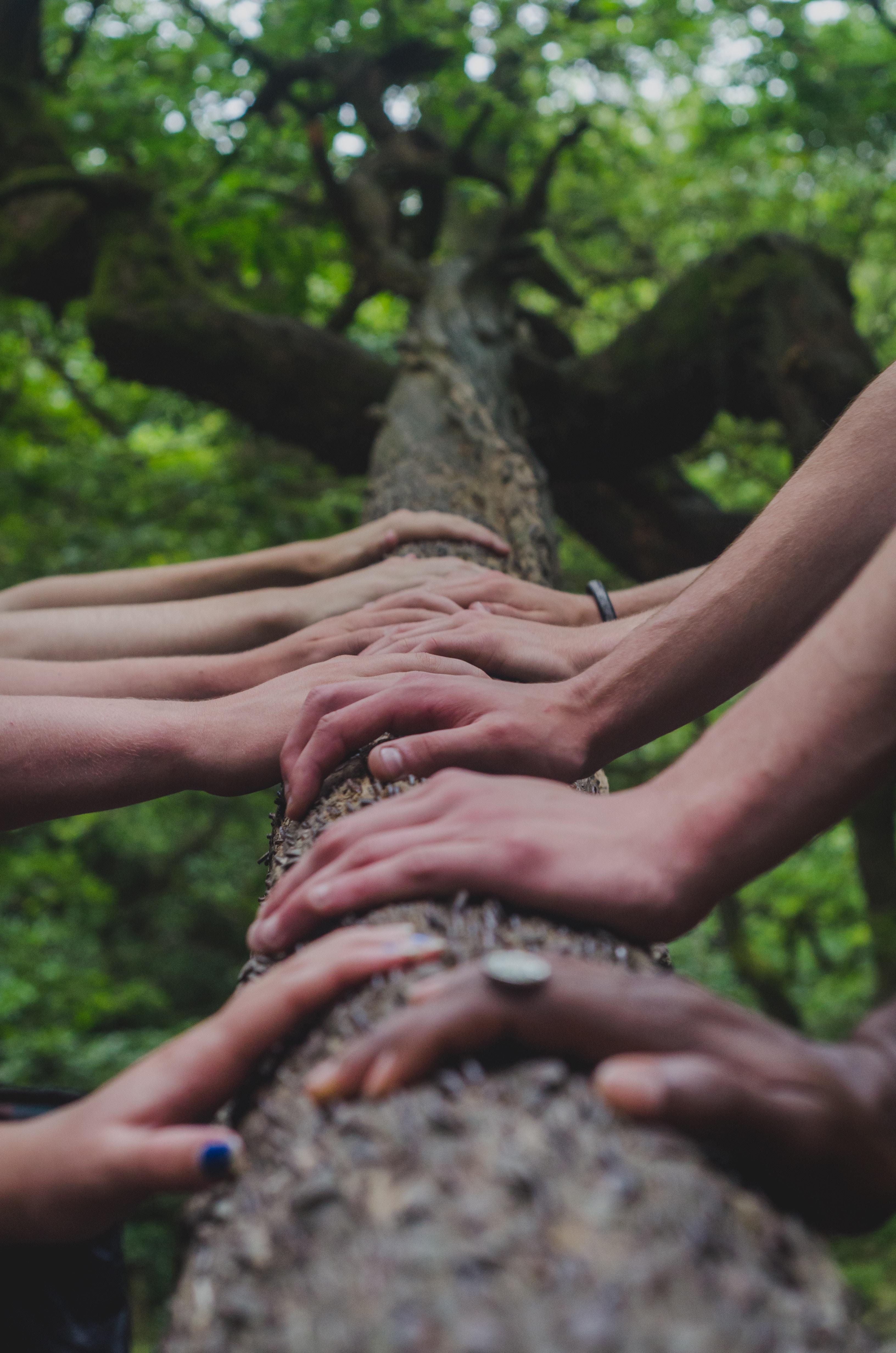 ihmiset pitelevät käsillään puun runkoa